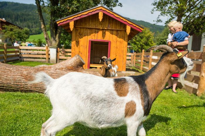 Bauernhofurlaub in Radstadt, Obersulzberggut im Salzburger Land