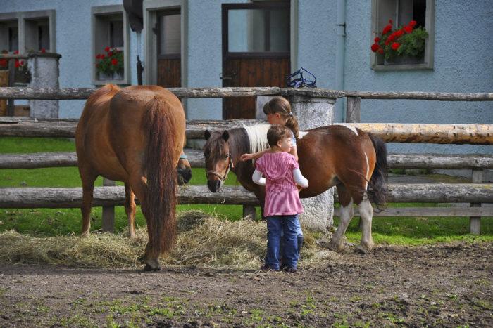 Hoftiere am Kinderbauernhof Obersulzberggut in Radstadt, Salzburger Land